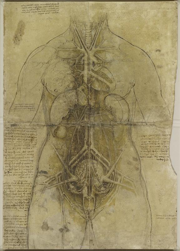davinci_anatomy